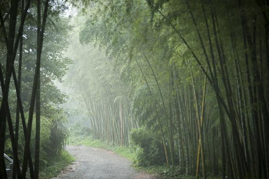 Bamboo Forest, Sichuan Province, China, Asia-Michael Snell-Photographic Print