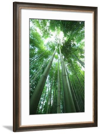 Bamboo Forest-Multi-bits-Framed Photographic Print