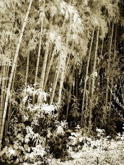 Bamboo Grove I-Alan Hausenflock-Photographic Print