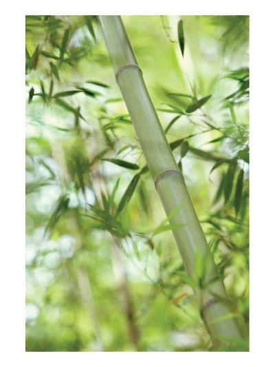 Bamboo I-Karin Connolly-Art Print