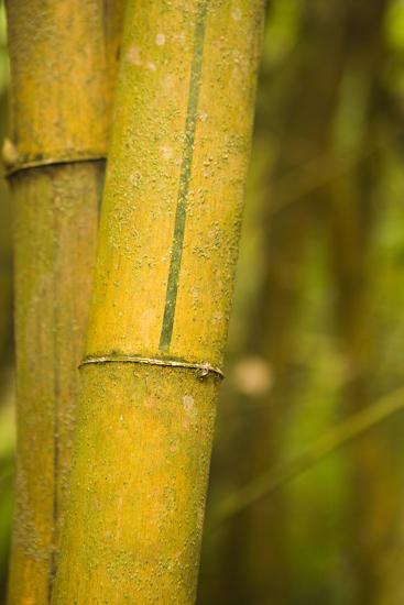 Bamboo I-Karyn Millet-Photographic Print