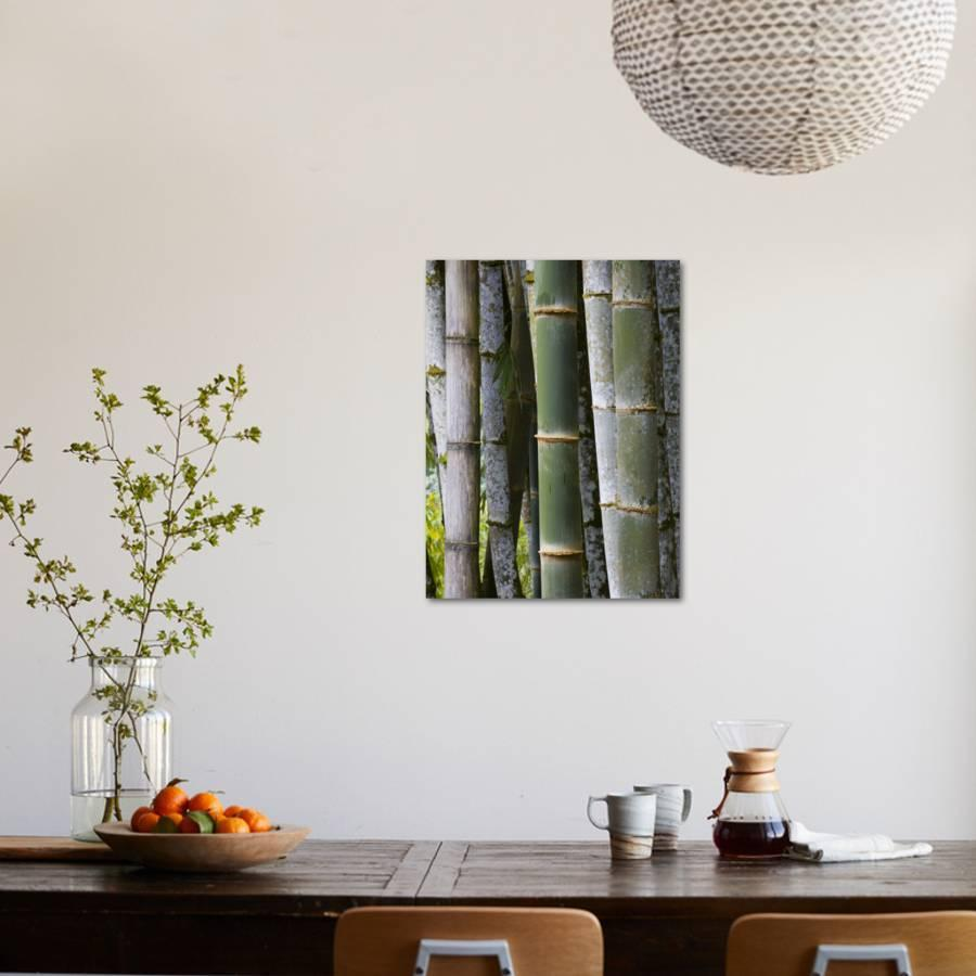 Bamboo, Jardin De Balata, Martinique, French Antilles, West Indies  Photographic Print by Scott T. Smith | Art.com