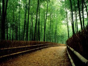 Bamboo Lane, Nishiyama, Kyoto, Japan
