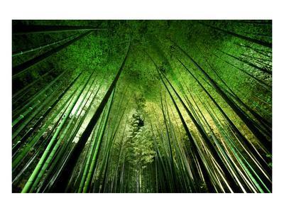 https://imgc.artprintimages.com/img/print/bamboo-night_u-l-f9brof0.jpg?p=0