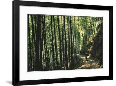 Bamboo Sea-Basil Pao-Framed Giclee Print