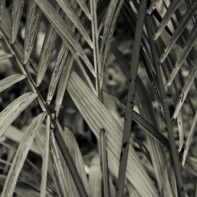 Bamboo Study II-Tang Ling-Photographic Print