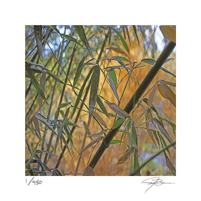 Bamboo-Ken Bremer-Limited Edition