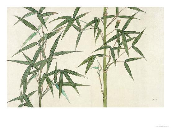 Bamboo--Giclee Print