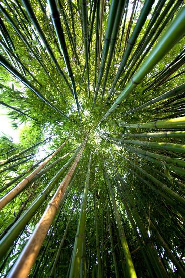 Bamboo-stevejack photos-Photographic Print