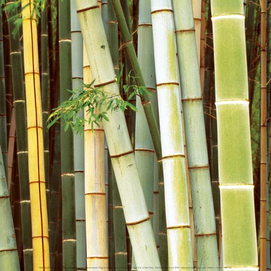 Bamboos Forest, Sagano, Kyoto, Japan-Rob Tilley-Art Print