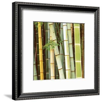 Bamboos Forest, Sagano, Kyoto, Japan-Rob Tilley-Framed Art Print