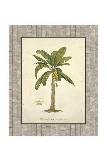 Banana Palm Illustration-Arnie Fisk-Art Print