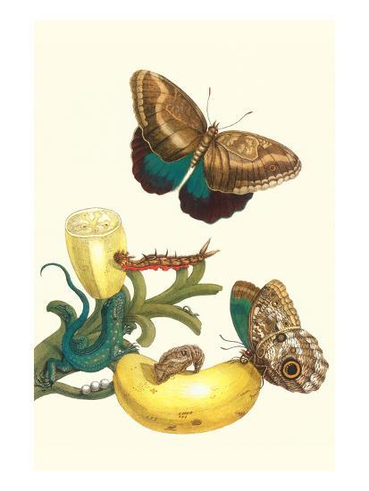Banana Plant with Teucer Giant Owl Butterfly and a Rainbow Whiptail Lizard-Maria Sibylla Merian-Art Print