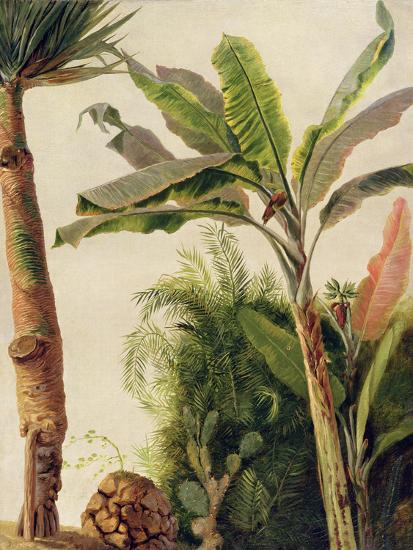 Banana Tree, C.1865-Frederic Edwin Church-Giclee Print