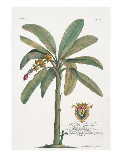 Banana Tree-Porter Design-Premium Giclee Print