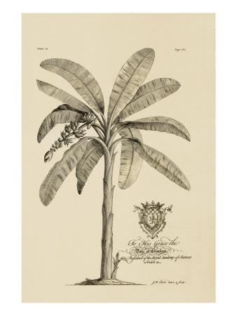 https://imgc.artprintimages.com/img/print/banana-tree_u-l-p88fpz0.jpg?p=0