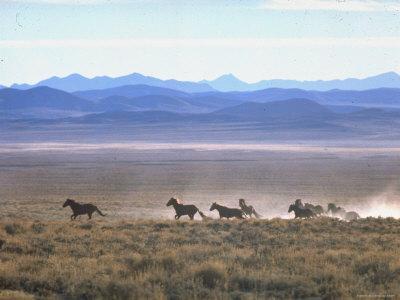 https://imgc.artprintimages.com/img/print/band-of-wild-horses-taking-flight-across-western-sage_u-l-p3negd0.jpg?p=0
