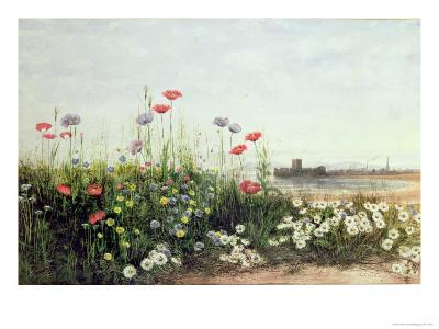Bank of Summer Flowers-Andrew Nicholl-Giclee Print