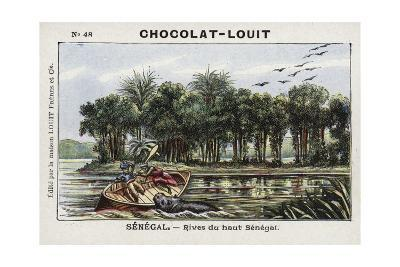 Banks of the Upper Senegal River, Senegal--Giclee Print