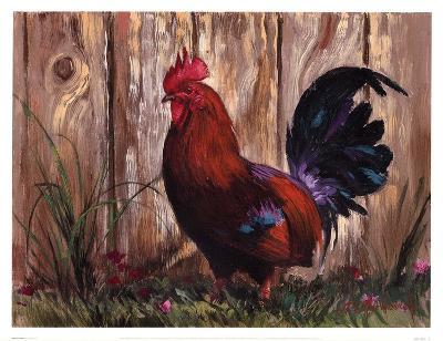 Bantie Rooster-Nenad Mirkovich-Art Print