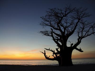 Baobab Tree, Sine Saloum Delta, Senegal, West Africa, Africa-Robert Harding-Photographic Print