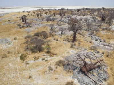 Baobab Trees on Kubu Island in the Makgadikgadi Pans National Park-Michael Polzia-Photographic Print