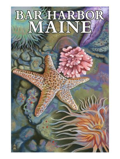 Bar Harbor, Maine - Tidepool Scene-Lantern Press-Art Print