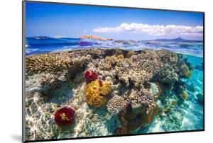 Mayotte : the Reef by Barathieu Gabriel