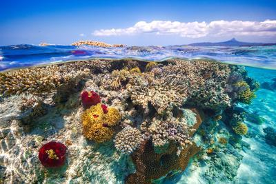 Mayotte : the Reef
