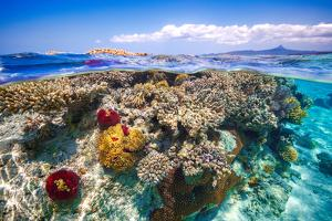 Mayotte : the Reef by Barathieu Gabriel