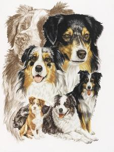 Australian Shepherds by Barbara Keith