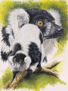 Black and White Lemur by Barbara Keith