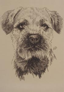 Border Terrier by Barbara Keith