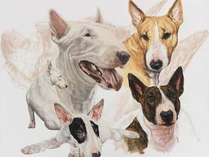 Bull Terrier with Ghost Image by Barbara Keith