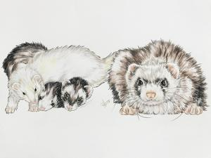 Family of Ferrets by Barbara Keith