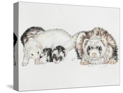 Family of Ferrets