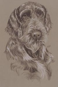 German Wirehaired Pointer by Barbara Keith