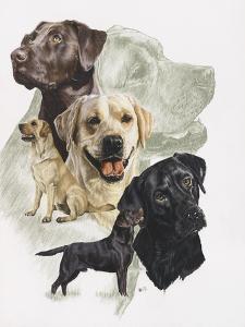 Labrador by Barbara Keith