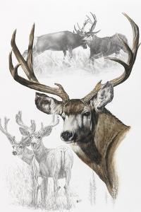 Mule Deer by Barbara Keith