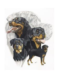Rottweiler by Barbara Keith