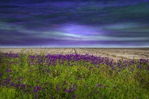 Beyond the Wildflower by Barbara Simmons
