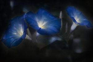 Blue Eyes Blue by Barbara Simmons