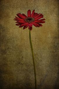 Daddy's Flower I by Barbara Simmons