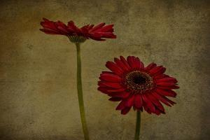 Daddy's Flower II by Barbara Simmons
