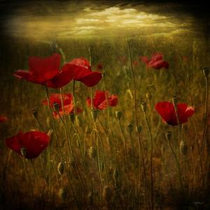 Fields of Red I by Barbara Simmons