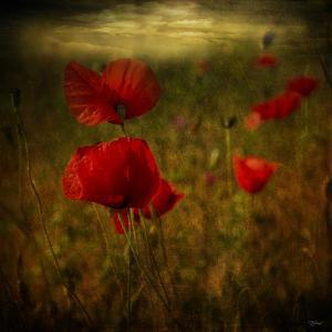Fields of Red II by Barbara Simmons