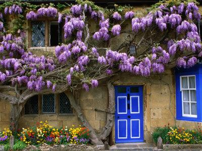 Cottage with Wisteria in Flower, Broadway, United Kingdom