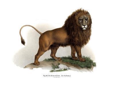 Barbary Lion, 1860--Giclee Print
