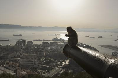 Barbary Macaque (Macaca Sylvanus) Resting on Old Canon at Sunrise-Mark Macewen-Photographic Print
