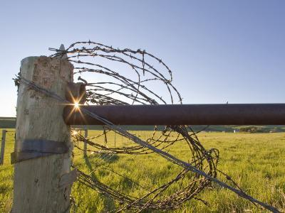 Barbed Wire Rolled Up, Lewistown, Montana-Chuck Haney-Photographic Print